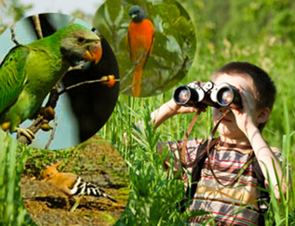 Go Bird Watching